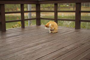 Deck City Deck Railing Experts